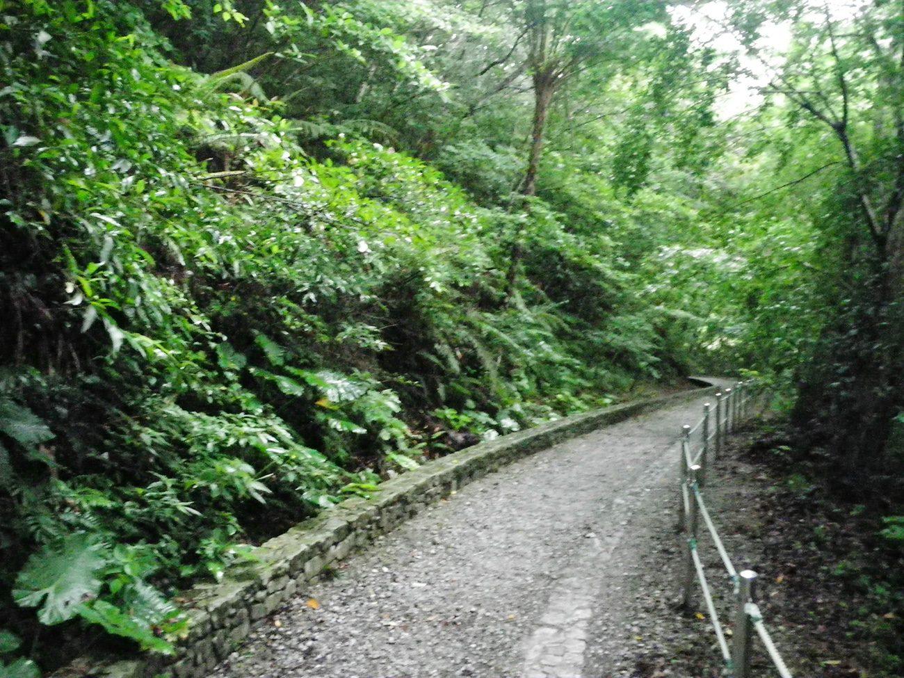 比地大滝トレッキングコース