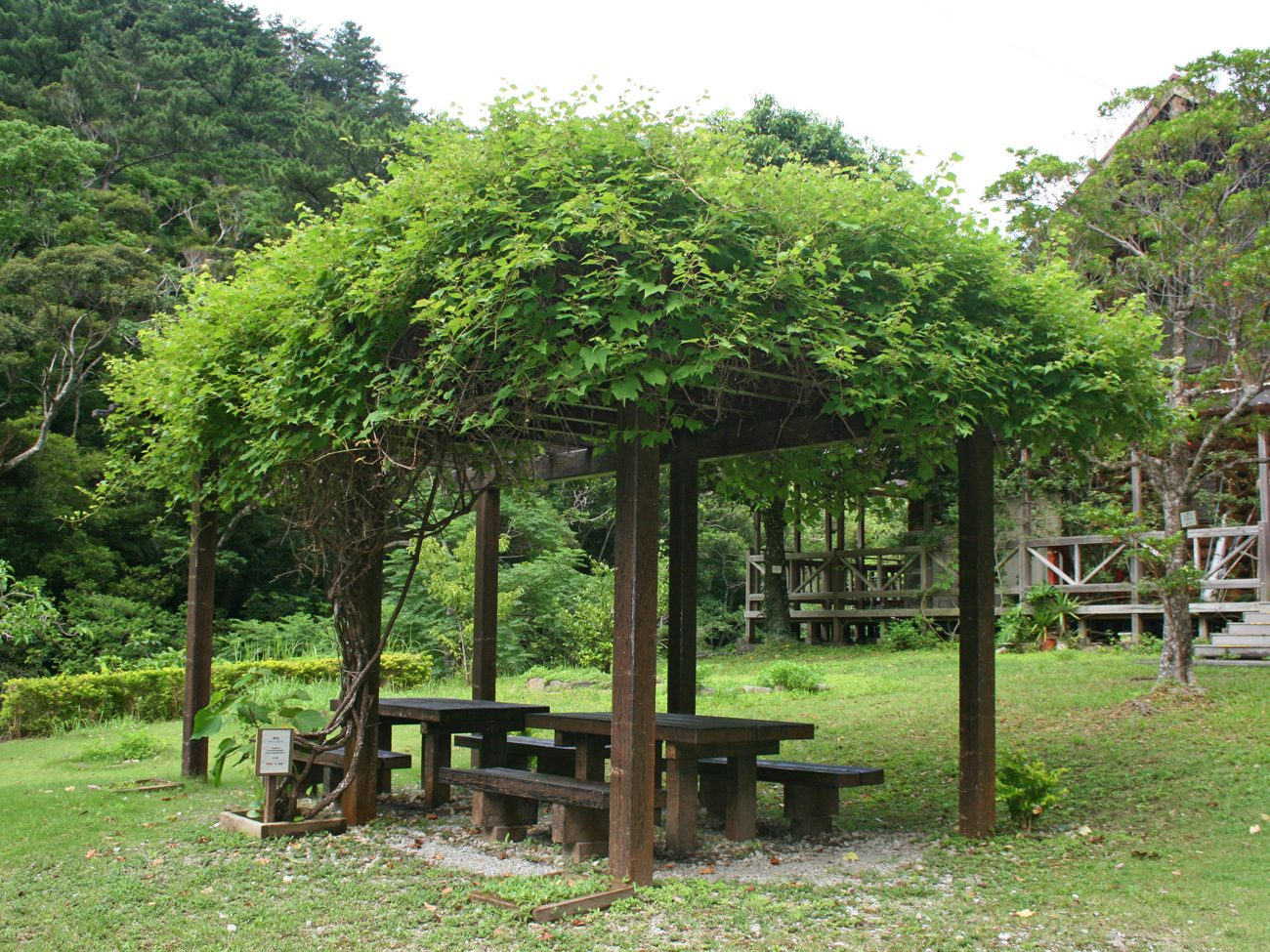 沖縄県国頭村やんばるの森観光スポット比地大滝